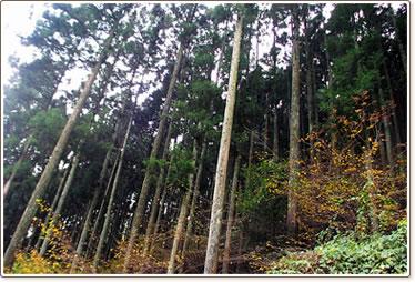 株式会社丸こ企画|木を使ったさいたま市の建築・不動産