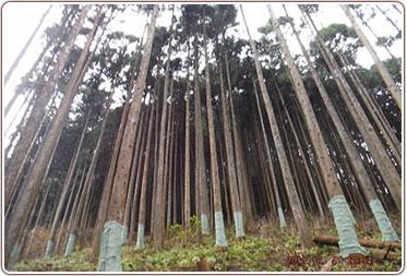 株式会社丸こ企画|植林活動